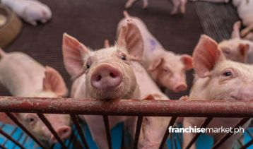 Your Guide to Starting a Piggery Business in the Philippines…